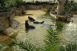 Bild: © Rolf Schlosser, Zoo AG